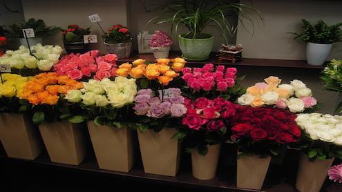 Rožių asortimentas specializuotoje gėlių parduotuvėje. Autorės nuotr.