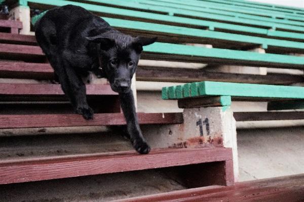 Hugo džiaugiasi laisve be pavadėlio. Aut. nuotr.