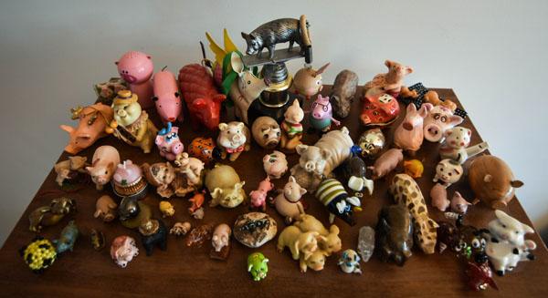 Kiaulių kolekcijos dalis. Vytauto Kardelio nuotr.