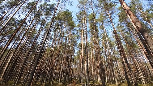 Miškas. Autoriaus nuotrauka